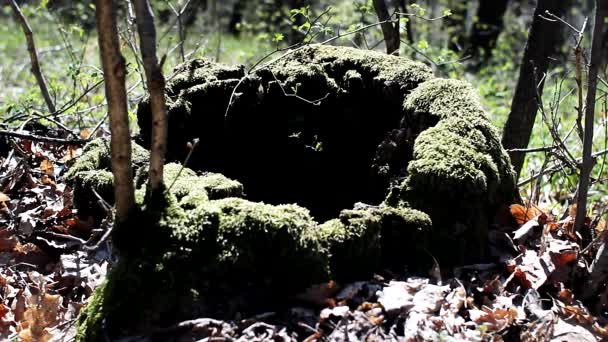 Tree Stump with Moss