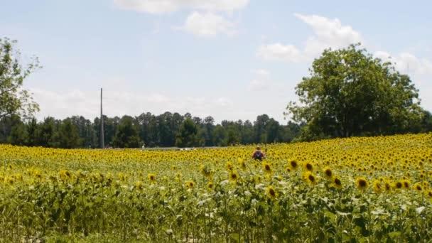 Wide shot of a flower field