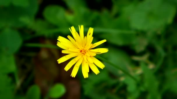 yellow flower and a blurry, green background