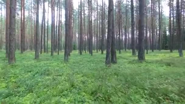 flight between trees in forest