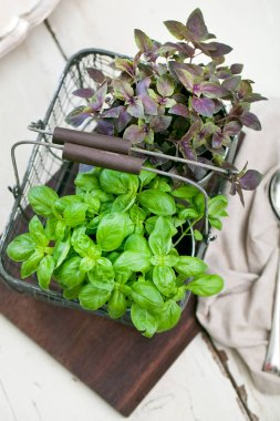 fresh red and green basil plant in a flower pot on rustic table.