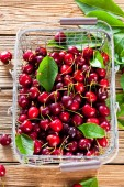 Fotografie Cherry basket. cherry tree branch. fresh ripe cherries. sweet cherries in garden..