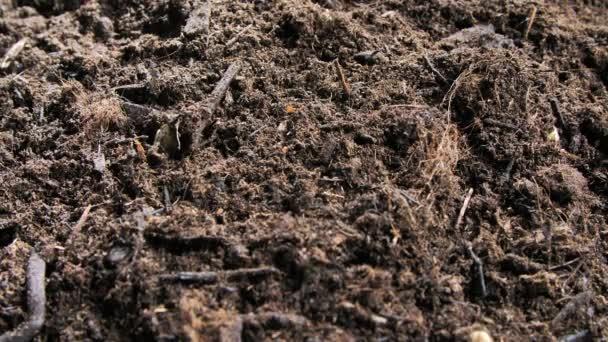 Detailní pohled chřestu pěstování na půdě na bio farmě, čerstvých produktů a zemědělství koncepce