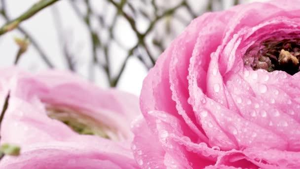 Perské blatky. Krásné světle růžové květnaté květy s kapkami na vodu