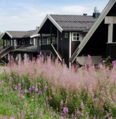 TRYSIL, NORWAY - 26 JULY 2018: lupine flowers and black living houses at largest ski resort Trysil in Norway