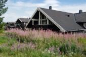 Trysil, Norvégia - 2018. július 26.: lila csillagfürt virágok és fekete élő házak legnagyobb sí resort Trysil, Norvégia