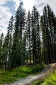Fotografie Bäume