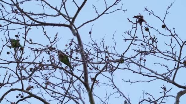 Zelené papoušci sedí na větvích stromu