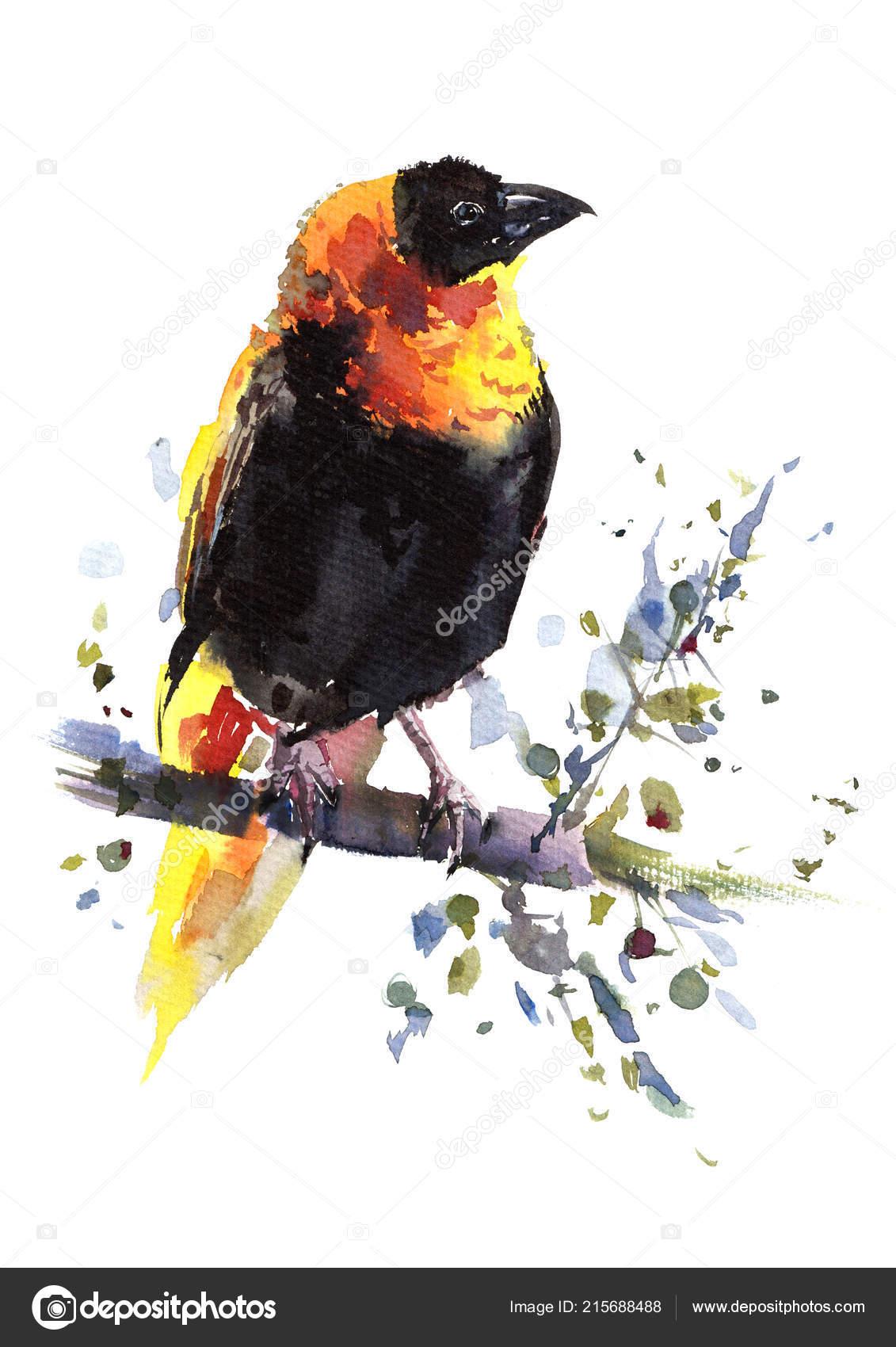 obrázek mého ptáka