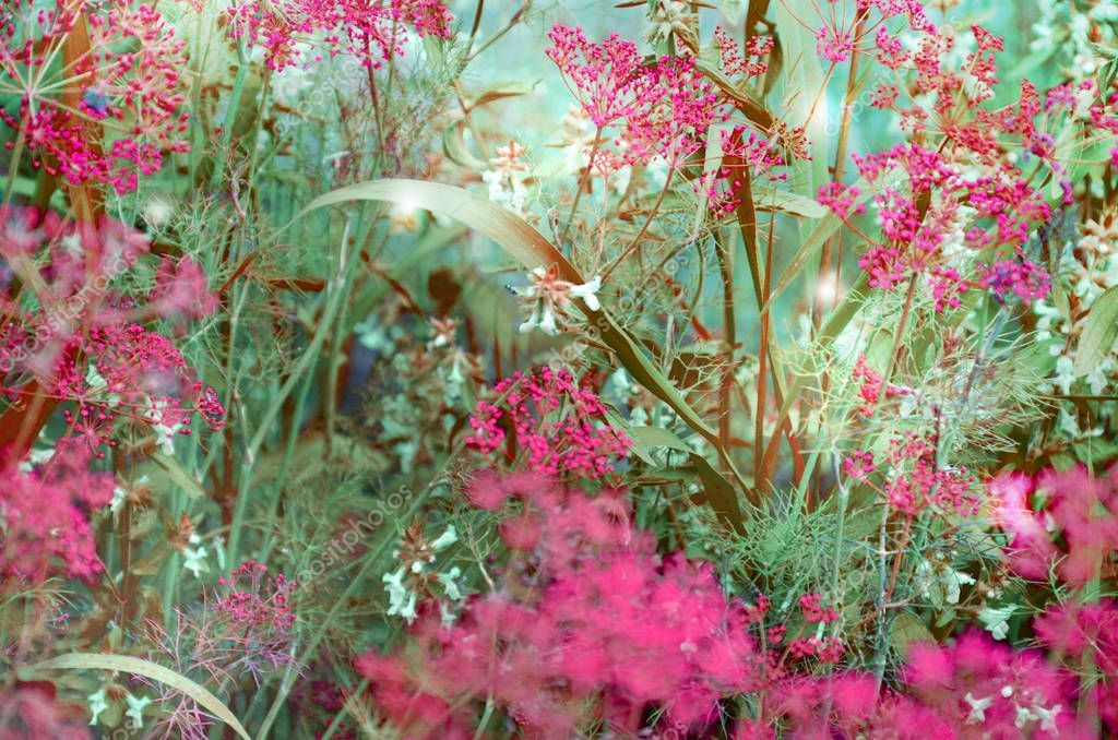Beautiful background of flowers and grass in turquoise, pink and brown colors. Selective focus. Image