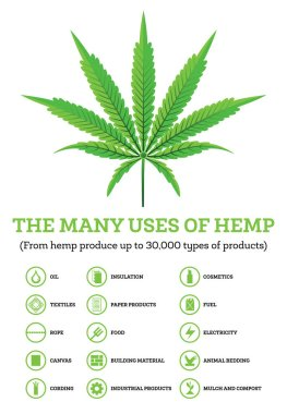 Industrial Hemp Infographic with Icons of Products. Vector Illustration. The Many Uses of Cannabis