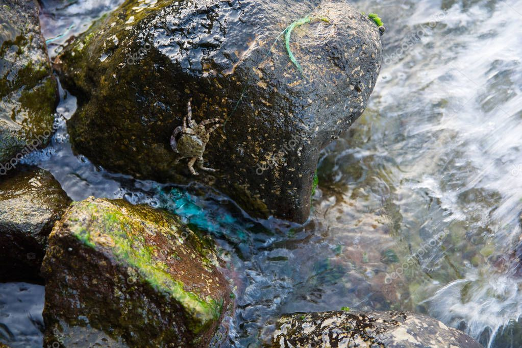 Crab waiting on the rocks. in sea waves