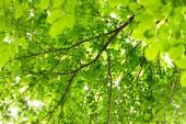 Přírodní zelené listy na pozadí. Bezpečný svět a koncepce ekologie.