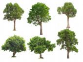 Šest stromů izolovaných na bílém pozadí.