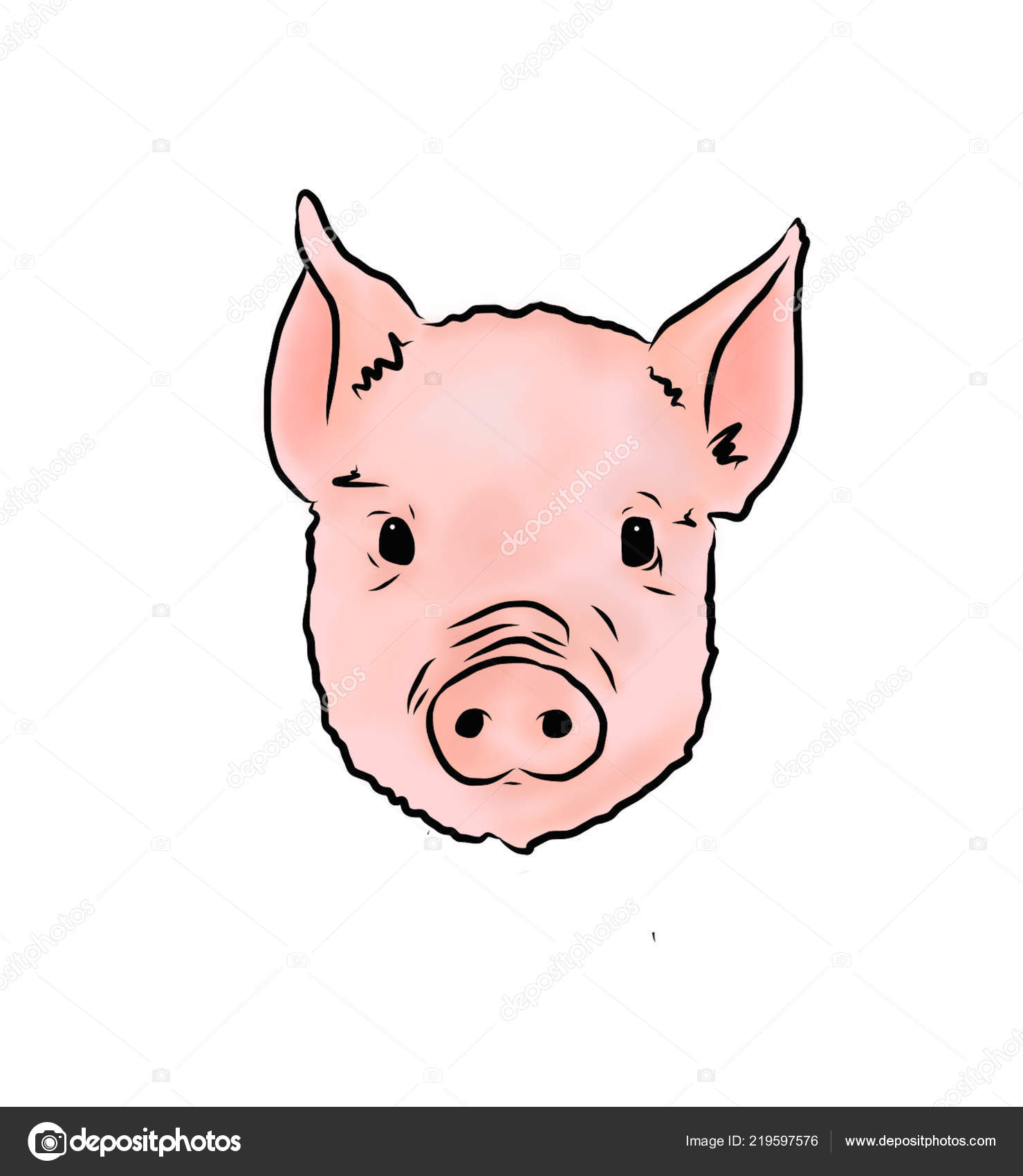 Cute Pig Face Illustration Vector Image By Dollygrey Vector Stock 219597576