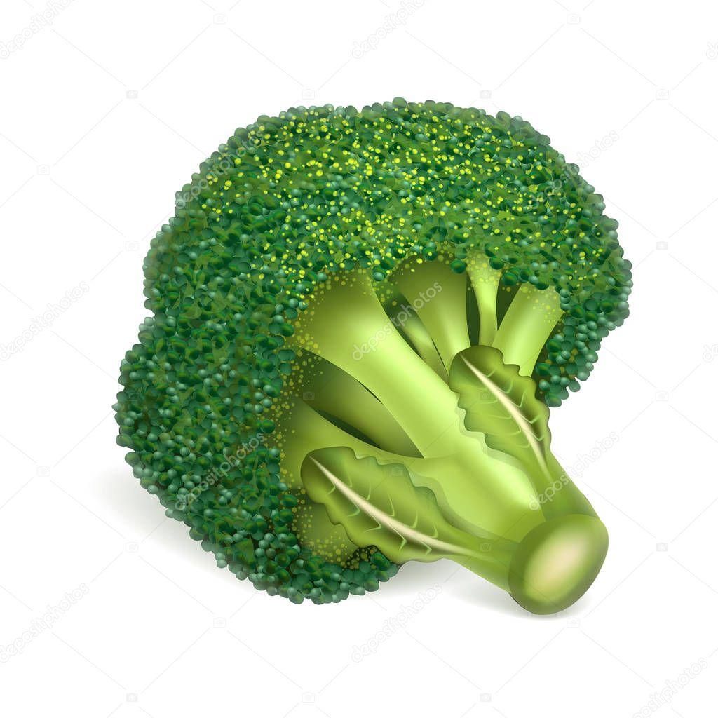 eco broccoli icon realistic illustration of eco broccoli vector icon for web design premium vector in adobe illustrator ai ai format encapsulated postscript eps eps format eco broccoli icon realistic