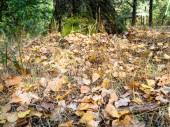 hrabanka z padlého dubu a břízy listy v městském parku na začátku podzimu
