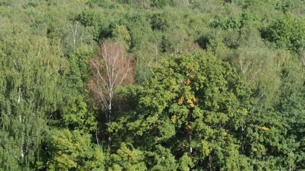 above view of lush foliage of forest illuminated by sun in sunny day at the beginning of autumn
