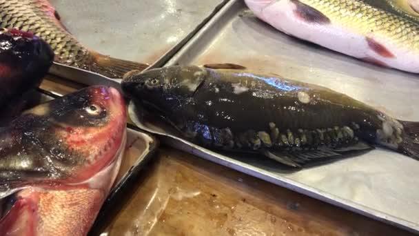 živé ryby kapr na hlavním panelu na krytý rybí trh