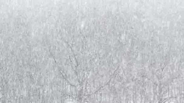 strong snowfall over oak grove in forest