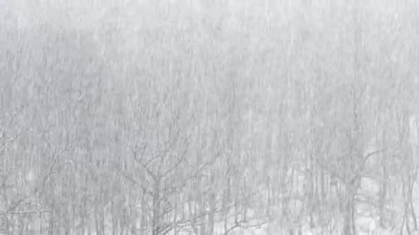 silné sněžení v průběhu stromy dubu a břízy