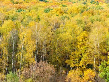 above view of clearing in yellow forest in autumn