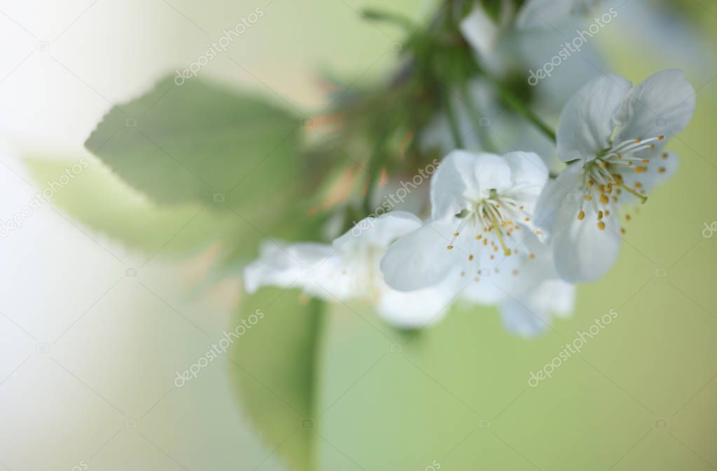 Photos of nature, plants, flowers are very popular in social networks, the Internet and among fans of landscape photography of nature