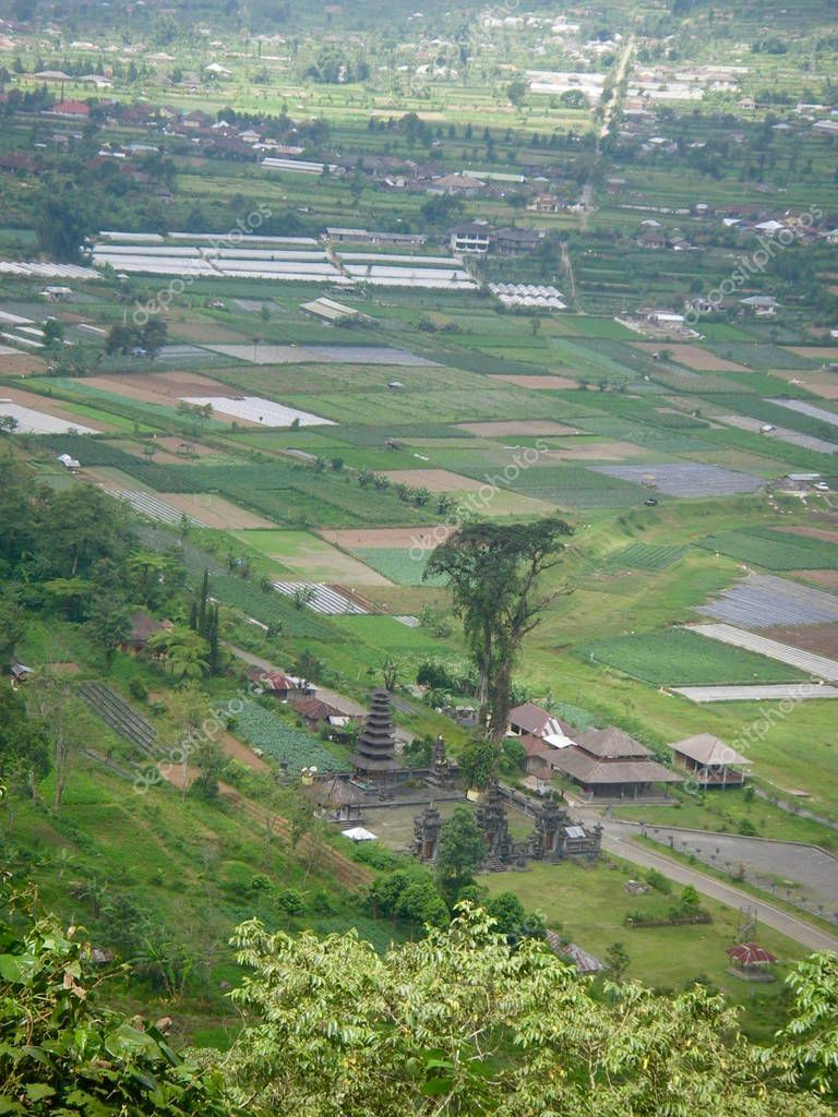 Ricefield in Bali with water