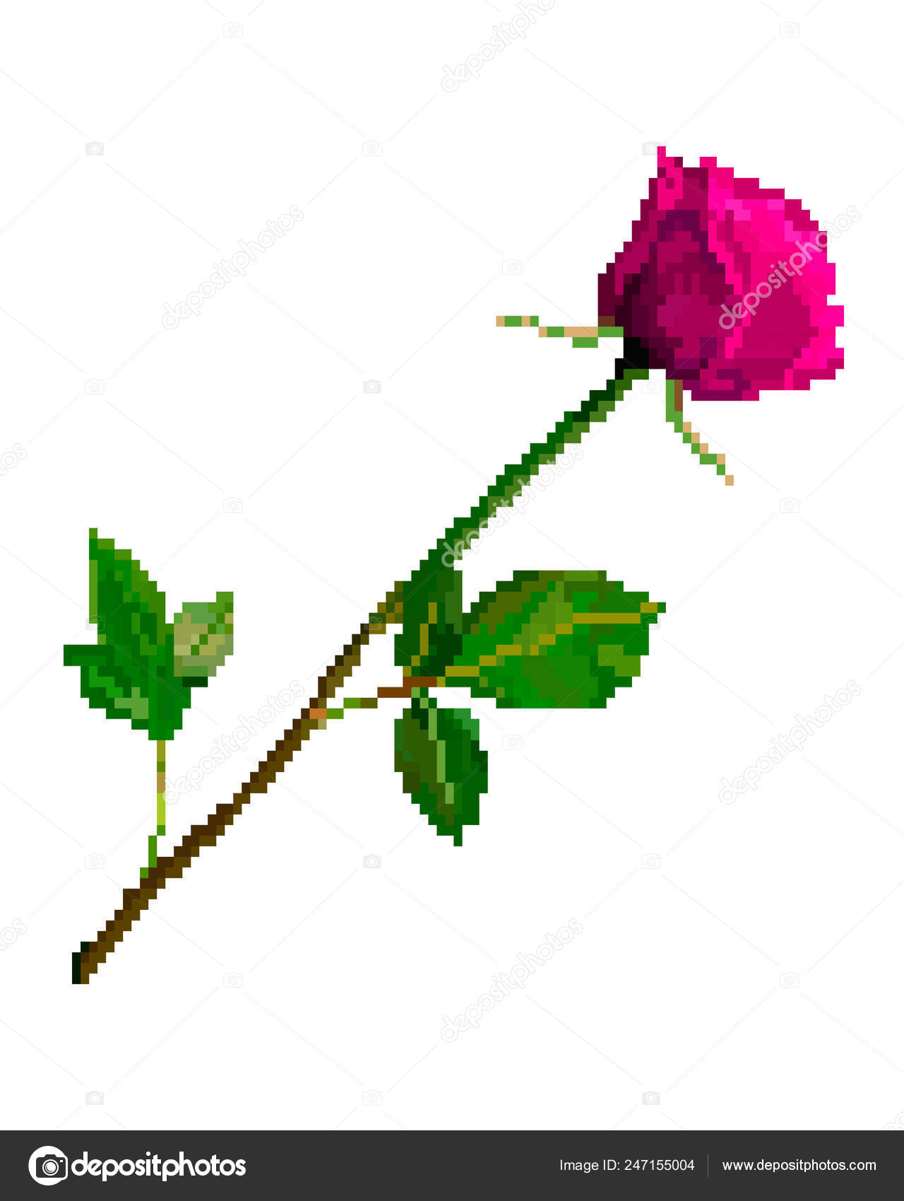 Fleur De Rose Art Pixel Isolé Sur Fond Blanc Image