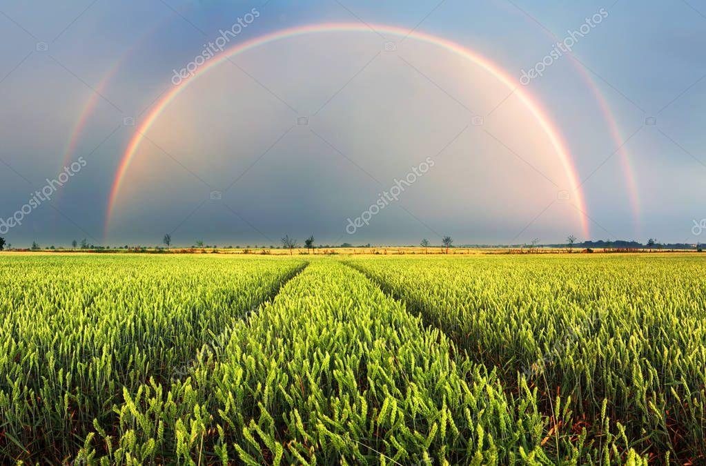 Фотообои Rainbow Rural landscape with wheat field on sunset