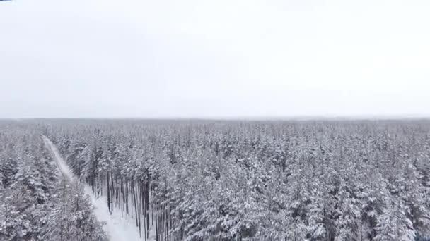 Kvadrokoptéra sestupuje dolů do lesa skrz borovice. Lesní cesta, zima, sněhem pokryté vrcholky stromů. DRONY poblíž větve stromu