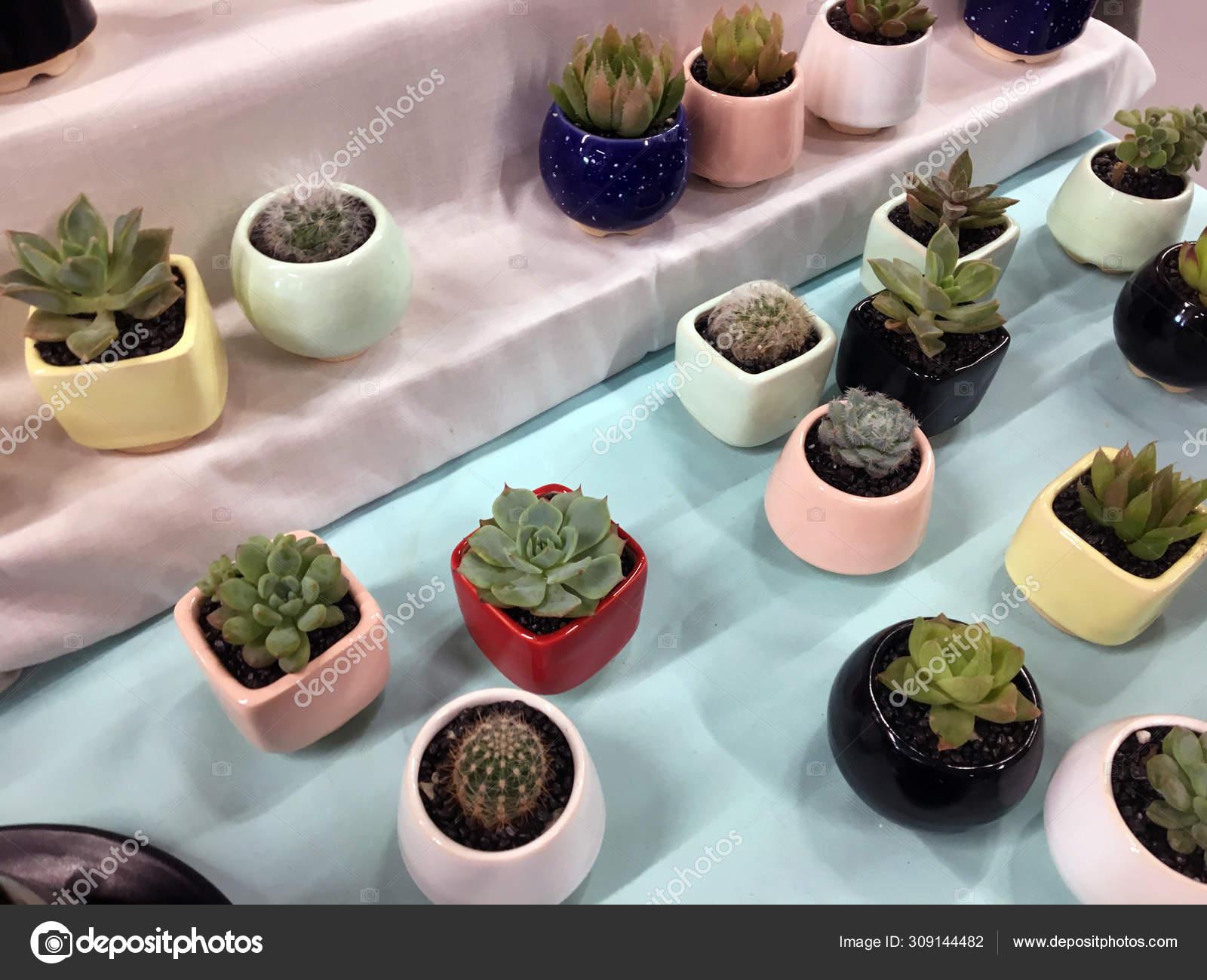 Ceramic Succulent Pot Cactus Planter Pot Plant Container Flower Pot Stock Photo Image By C Anastasiagorova Gmail Com 309144482