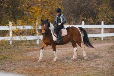 Equestrian training horse outdoor