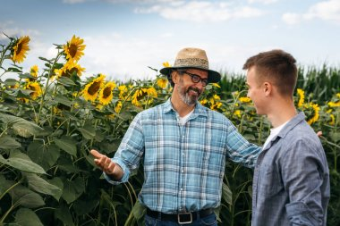 Mature man educating young colleague in sunflowers field