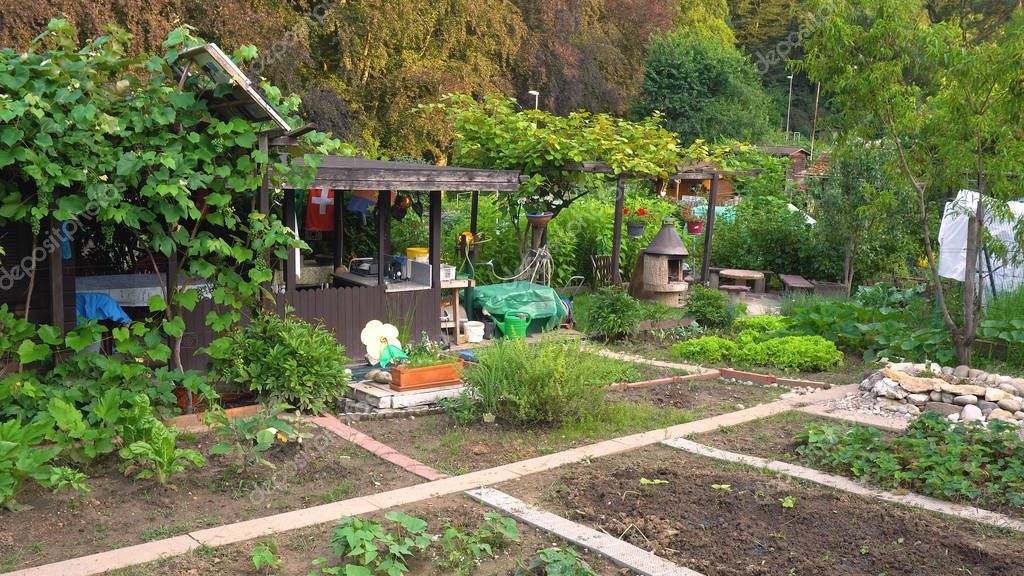 Allotment Community Garden - Healthy and Organic Plants and Vegetables