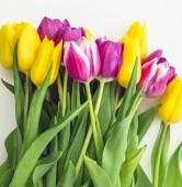 Jarní kytice žlutých tulipánů izolovaných na bílém pozadí, detail