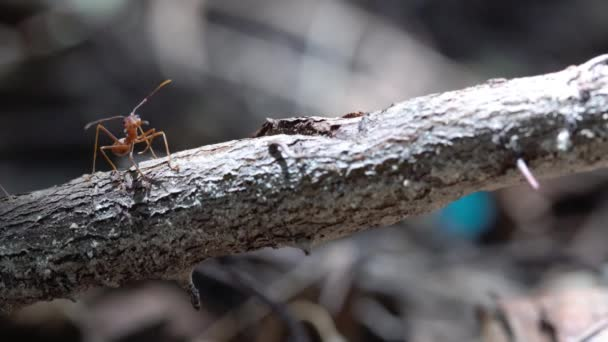 on a tree trunk there are several ants