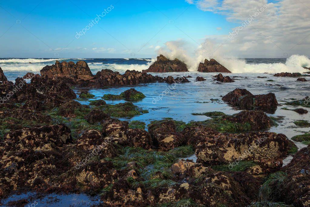 Morning along the Big Sur coast, California, USA.