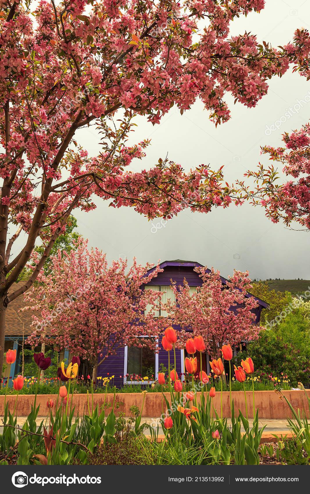 pays maison apple arbre fleur paysage rural — photographie