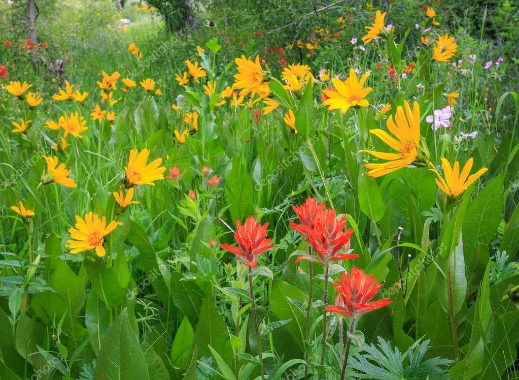 amazing yellow and red  wildflowers growing at lawn