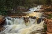 Teče vodopád v jehličnatých lesů, Usa
