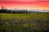 Fotografia Wolf Creek tramonto, montagne di Uinta, Wasatch Back, Utah, Stati Uniti dAmerica
