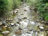 Nézd folyó folyó az erdő