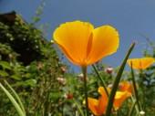 Gelbe Blumen Blick von unten