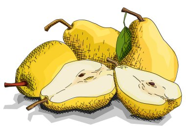 Vector illustration sketch of drawing fruit yellow pears with halves.