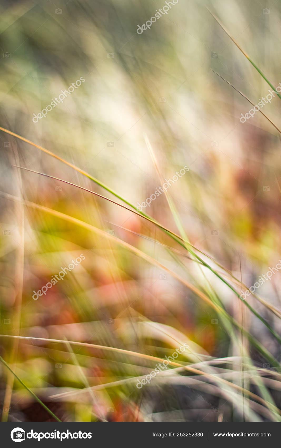 деревенском весной поля стоковое фото Anneleven 253252330
