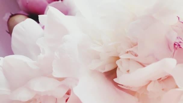 Nádherné bílé a růžové pivoňkové květy jako pozadí, svatba a květinový dekor