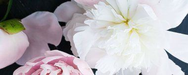 Blooming peony flowers as floral art background, botanical flatlay and luxury branding