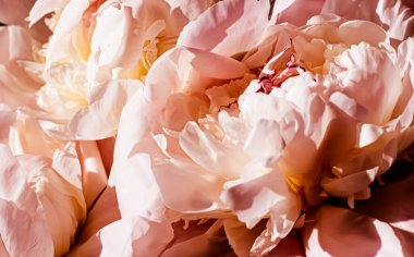 Peony flowers as luxury floral background, wedding decoration and event branding