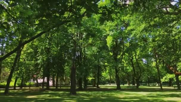 Sonne scheint durch Bäume im sonnigen Wald, grünes Laub im Wald als Natur, Landschaft und natürliche Umgebung